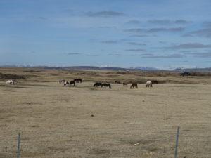 2016-04-25 Pferde