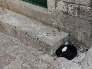 Katze in Montenegro